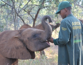 An update from the Elephant Orphanage project