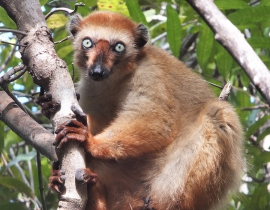 Update on the  Lemur Conservation Association