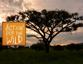 Action for the Wild announces support of conservation projects for 2017!