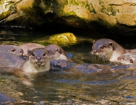 Educating the future of otter survival