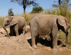 A second chance for orphan elephants
