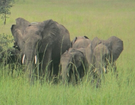 Releasing Elephants…