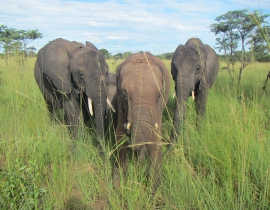 Elephant Orphanage Project Update: October – December 2016