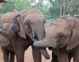 Elephant Orphanage Project Update