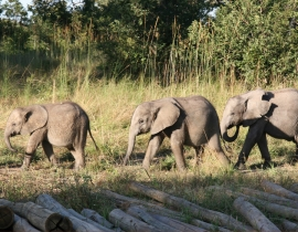 Update from Action for the Wild's Supported Elephant Orphanage Project