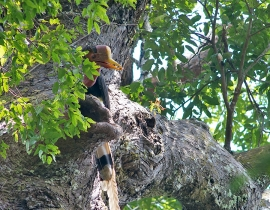 Update from the Hornbill Research Foundation
