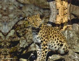 Overview of Wildlife Vets International's Work in 2013