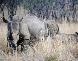 Supporting Save the Rhino's rangers