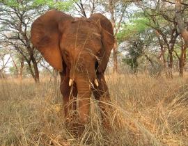 Orphaned Elephants Begin Journey Towards Life in the Wild