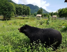 Free the bears continue to work to develop the Luang Prabang Wildlife Sanctuary