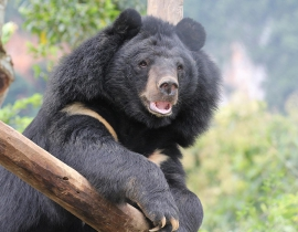 An update from Free the Bears Fund