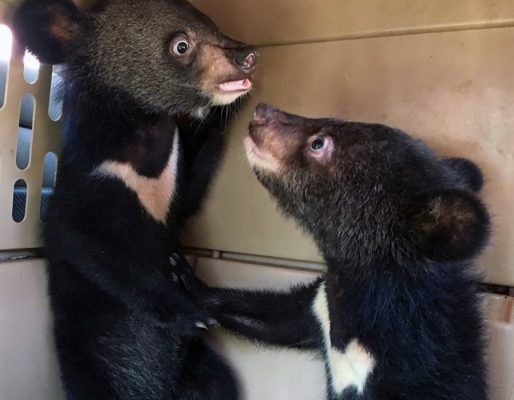 2019 Update from Free the Bears